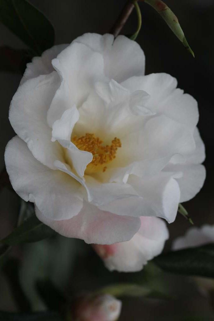 White Retic
